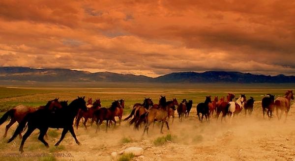 Nevada_Highway_93_wild_horses_4.28.16