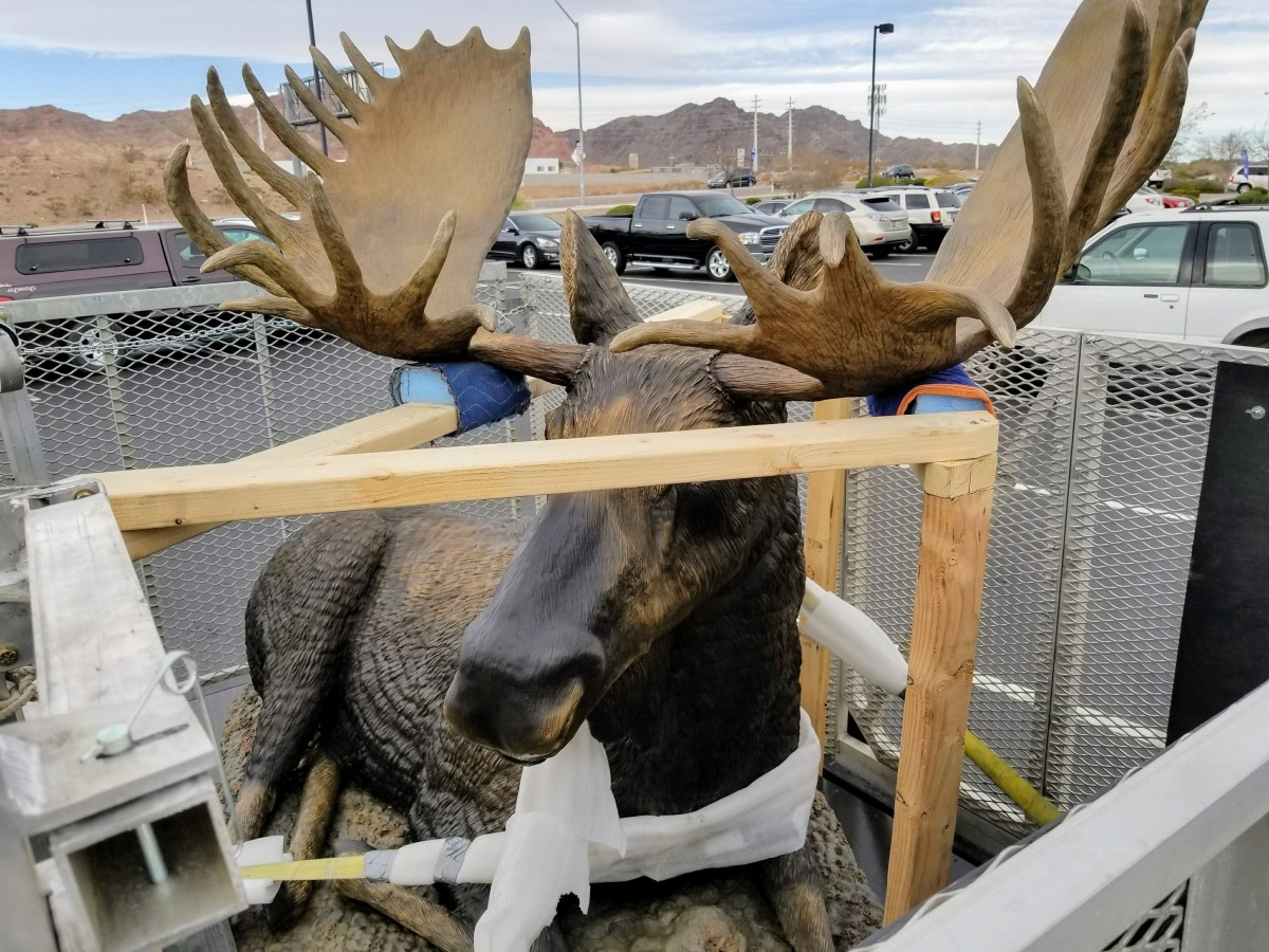 Moose Spotted in Boulder City!